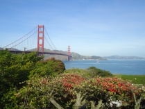Golden Gate Bridge, take two. (and flowers)