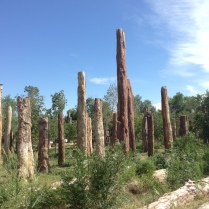 owned by ye ma corporation, these are fossilized tree bark (really expensive!)