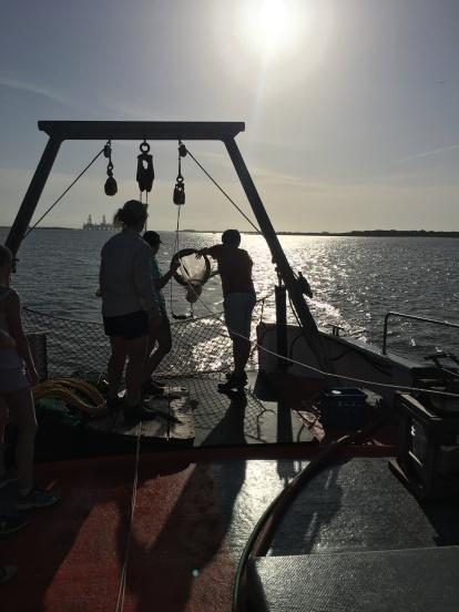 obtaining phytoplankton from the estuary