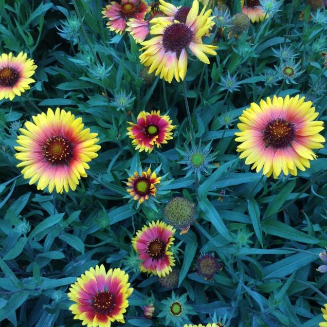 some pretty flowers i found!