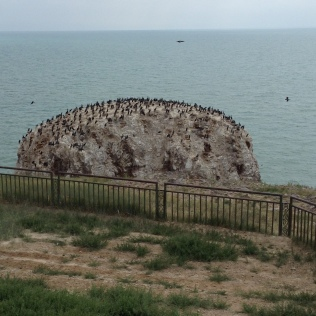 Bird Island -- in the summer, birds will come here to lay eggs.