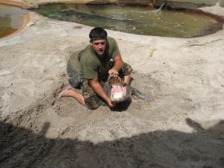 At the alligator farm